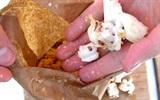 Cách trồng nấm bào ngư sạch ngon tại nhà