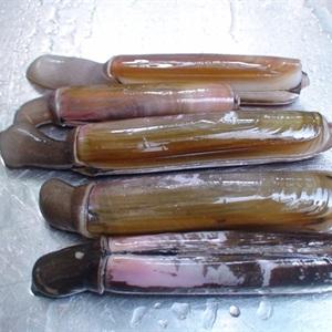 Ốc móng tay sốt dầu hào