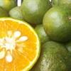 Cách phân biệt cam Canh Việt Nam với cam Trung Quốc