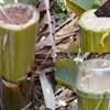 Bài thuốc dân gian chữa bệnh đau lưng chỉ với thân cây chuối
