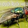 5 mẹo nhỏ diệt ruồi tận gốc chỉ trong một ngày