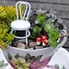 Khéo tay làm ngay khu vườn mini trong tách trà