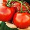 Mách chị em 5 loại trái cây giảm cân nhanh nhất hiện nay