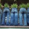 Chủ nhà tinh nghịch trồng cây trong quần bò