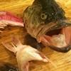 Xương và đầu cá: Thực phẩm tuyệt vời giúp cho cây cà chua sai trĩu quả