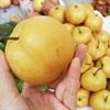 Phân Biệt 8 Loại Trái Cây Trung Quốc Nhập Về Việt Nam