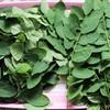 Mẹo nhận biết rau ngót nhiễm hóa chất độc hại