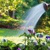 7 tác dụng tuyệt vời của muối giúp vườn rau luôn xanh tốt