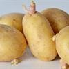 Những bộ phận của rau củ quả khi ăn có thể nguy hại đến tính mạng