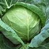 5 loại rau xanh trời càng lạnh càng phát triển tươi tốt
