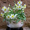 6 loại hoa đẹp và ý nghĩa trang trí phòng khách ngày Tết