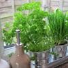 Mẹ 8x chia sẻ trồng cây gia vị trong nhà vừa để nấu ăn vừa chữa bệnh