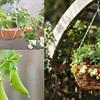 Nông dân phố cùng trồng trái cây và rau trong giỏ treo vừa làm cảnh vừa để ăn dần
