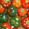 Khám phá lợi ích đáng kinh ngạc mang lại cho sức khỏe của ớt chuông