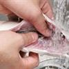 Mẹo khử mùi cá tanh trên các vật dụng đã chế biến sau khi nấu ăn không phải ai cũng biết