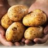 Bí quyết làm trắng khoai tây ngả màu