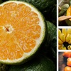 Top 5 rau quả mùa thu cực tốt cho bé