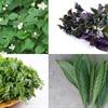 6 loại lá chữa bệnh ho hiệu quả