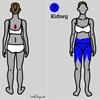 9 nhóm bệnh có thể được phát hiện nhờ vị trí các cơn đau