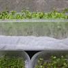 Cách trồng rau mầm trên khăn giấy