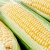 8 lợi ích bất ngờ từ việc ăn bắp
