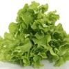 Người Nhật trồng rau siêu sạch siêu ngon mà không cần đến một tấc đất