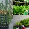 Tổng hợp 6 địa chỉ cửa hàng bán hạt giống trồng rau uy tín tại Hồ Chí Minh