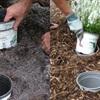 10 mẹo làm vườn đơn giản mà hữu ích dành cho bạn