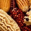 Tăng cường sức khỏe cho gia đình khi kết hợp bắp với những thực phẩm này