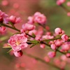 Ý nghĩa những loại hoa Tết thường được trưng bày trong nhà vào ngày lễ cổ truyền Việt Nam