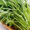 Bạn nghĩ gì về việc ăn rau muống gây sẹo lồi? Và nên ăn gì để tránh sẹo lồi?