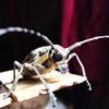 Cách diệt trừ bọ xít hút máu mùa mưa bằng phương pháp thủ công tự nhiên