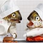 Vui nhộn với những hình ảnh hài hước khi cá làm đầu bếp