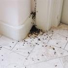 7 mẹo đuổi kiến mọi lúc mọi nơi cho nhà ẩm thấp