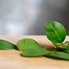 Hàng loạt lợi ích từ lá chanh có thể bạn chưa biết