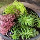 Tự trồng cây trong ống thủy tinh vừa đẹp vừa nghệ thuật