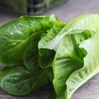 Những thực phẩm nên tránh ăn trong mùa mưa bão vì có thể gây đau bụng