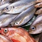 Mẹo sơ chế giúp cá không bị tanh