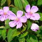 8 loại cây giải độc trong trường hợp khẩn cấp