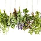 Các loại thảo mộc dùng trong ẩm thực châu Âu nói chung và ẩm thực Ý nói riêng