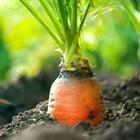 6 loại rau củ thích hợp trồng tháng 11