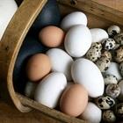 Trứng gia cầm nào bổ nhất: Gà, vịt, ngỗng, cút hay bồ câu?