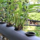 10 Cách Sử Dụng Ống Nhựa PVC Để Làm Vườn