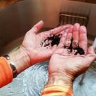 Tuyệt chiêu khử mùi tanh trên tay sau khi ăn hải sản