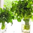 Bí quyết bảo quản rau thơm