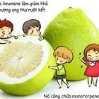 Ăn trái cây không lo mắc bệnh ung thư