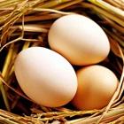 Cách chọn trứng gà tươi và mới