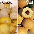 Cách đơn giản để phân biệt nhãn lồng Hưng Yên và nhãn Trung Quốc