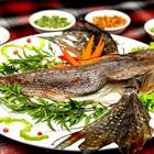 Độc lạ cá tắc kè thơm ngon, bổ dưỡng đặc trưng của người miền Trung