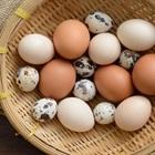 Loại Trứng Nào Tốt Cho Sức Khỏe: Trứng Gà - Trứng Vịt - Trúng Cút?